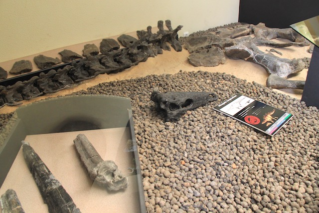 museu da lourinha fosseis