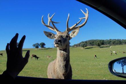 janela safari madrid em familia
