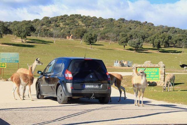 safari carro madrid em familia