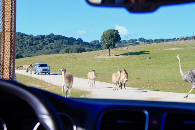 safari madrid em familia