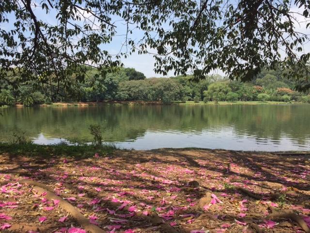 parque ibirapuera arvores