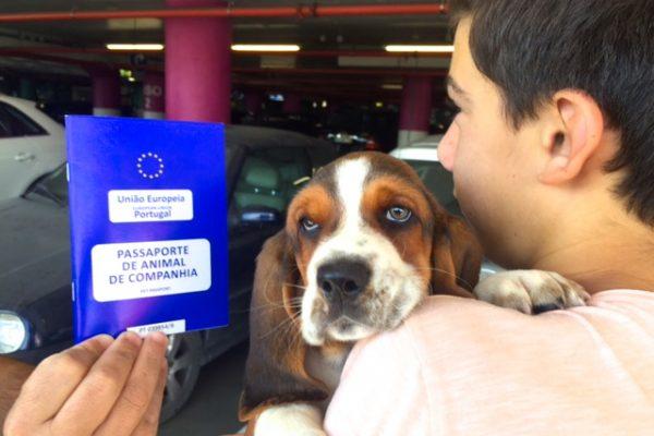 viajar de avião com um cão