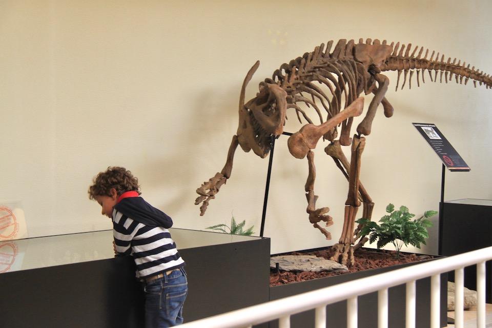museu da lourinha miudo