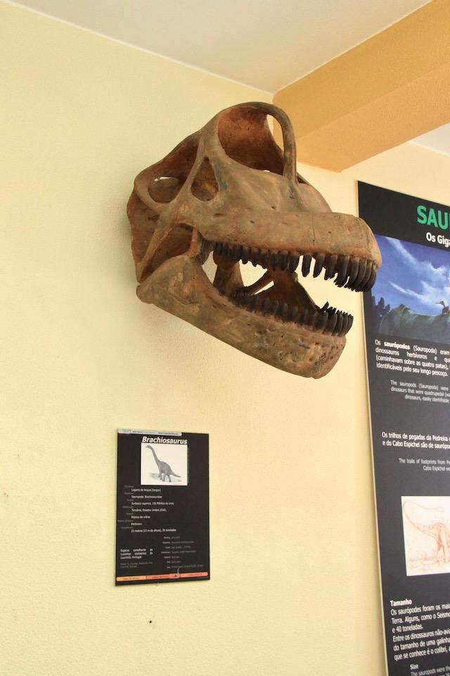 museu lourinha cabeca dinossauro