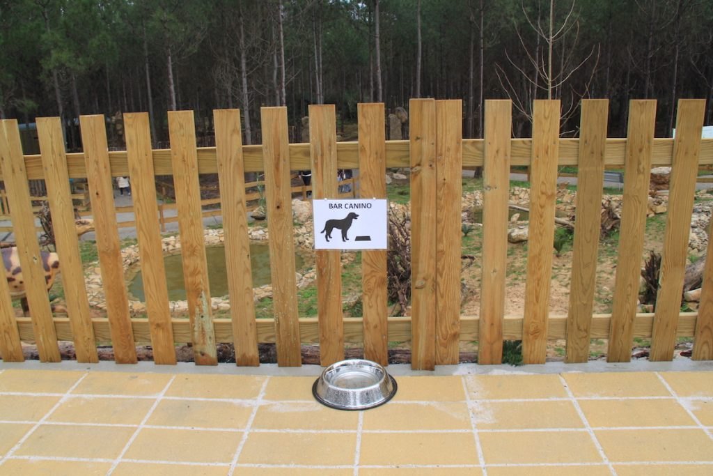 Dino Parque bar canino
