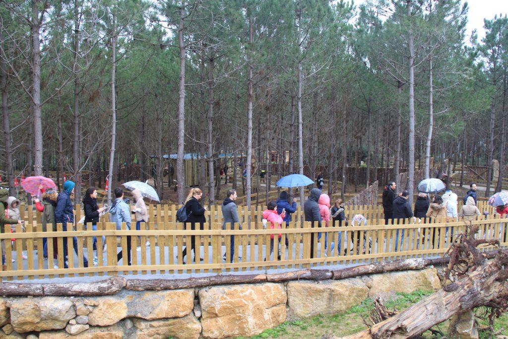 Dino Parque pinhal